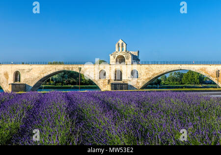 France, Provence region, Avignon city, St. Benezet Bridge, W.H., lavanda field - Stock Photo