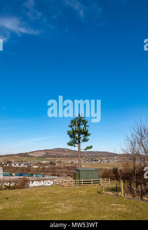 Mobile phone mast imitating a tree - Stock Photo