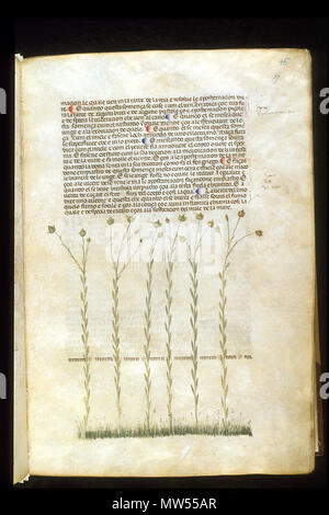 . English: arapion the Younger, Translation of the herbal (The 'Carrara Herbal'), including the Liber agrega, Herbolario volgare; De medicamentis, with index (ff. 263-265) Italy, N. (Padua); between c. 1390 and 1404 . between c. 1390 and 1404. An Italian translation, possibly from a Latin translation, of a treatise orginally written in Arabic by Serapion the Younger (Ibn Sarabi, likely 12th century). 115 Carrara Herbal09 - Stock Photo