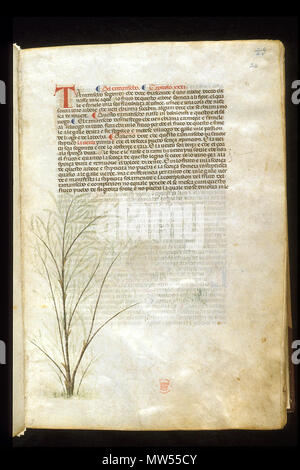 . English: arapion the Younger, Translation of the herbal (The 'Carrara Herbal'), including the Liber agrega, Herbolario volgare; De medicamentis, with index (ff. 263-265) Italy, N. (Padua); between c. 1390 and 1404 . between c. 1390 and 1404. An Italian translation, possibly from a Latin translation, of a treatise orginally written in Arabic by Serapion the Younger (Ibn Sarabi, likely 12th century). 115 Carrara Herbal16 - Stock Photo