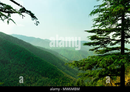 Himalayan range covered with trees fading off into the distance and covered with pine trees. Himachal pradesh has many such sights which makes it a tourist favorite for summer vacations - Stock Photo