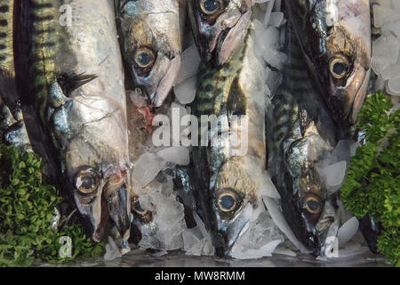 freshly caught mackerel on display on a fishmongers stall at borough market in london.fresh oily fish  healthy eating and good for the heart. low fat.