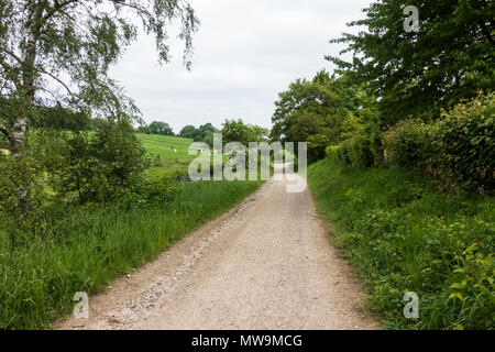 Sunken lane, hollow way or holloway in countryside, South Netherlands, Limburg, Netherlands. Stock Photo
