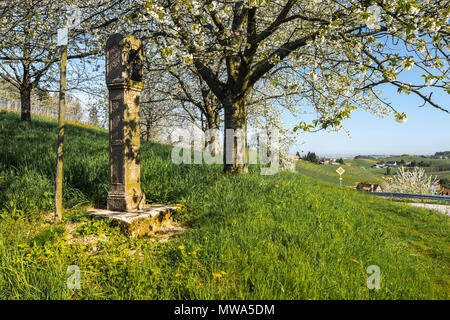 Spring in the foothills of the Black Forest, resort town, Sasbachwalden, Germany, vineyard and blooming fruit trees, Black Forest kirsch trees - Stock Photo