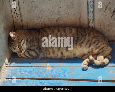 Striped street cat sleeps on a blue wooden box in the shade of a stone wall. - Stock Photo