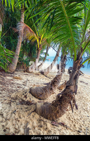 Coconut island of Koh Samui in Thailand. - Stock Photo