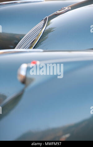 Jaguar XK 120 1954 fixed head with brown leather bonnet straps - Stock Photo