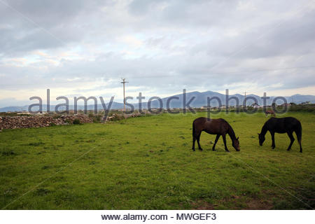 Two horses grazing in a field near Castlegregory in County Kerry, Ireland as the sun goes down. - Stock Photo
