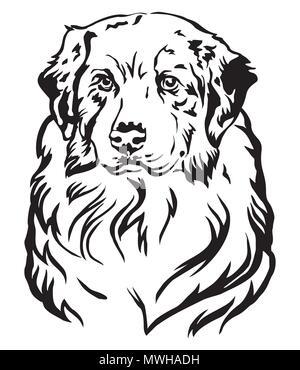 Decorative portrait of dog Australian shepherd, vector isolated illustration in black color on white background - Stock Photo
