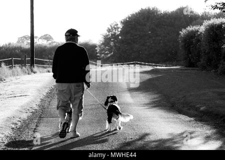 An elderly man walking his dogs in black and white - Stock Photo