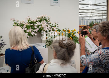 Visitors take photographs of the RHS Chelsea Plant Of The Year 2018, a Hydrangea Runaway Bride Snow Drop, at the Chelsea Flower Show in London, UK. - Stock Photo