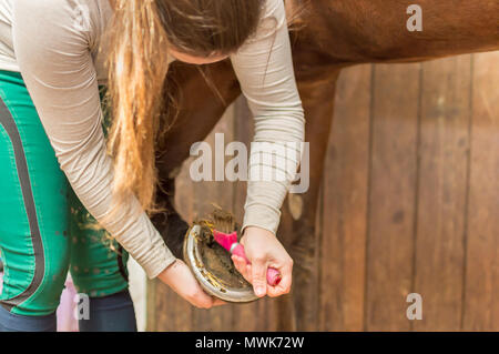 In the stable is a young rider with her race horse, a Hanoverian. She lifts the horse's leg and cleans the hooves with a hoof scraper. - Stock Photo