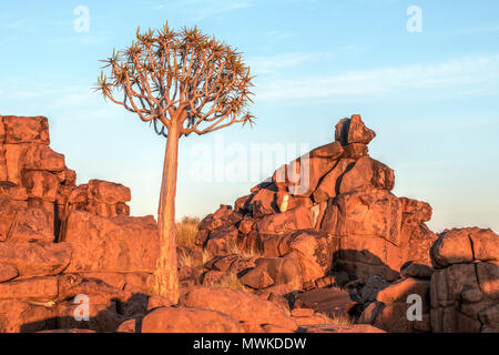 Quiver Tree Forest, Keetmanshoop, Namibia, Africa - Stock Photo