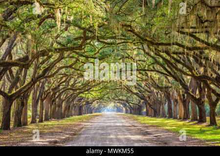 Savannah, Georgia, USA historic oak tree lined dirt road. - Stock Photo