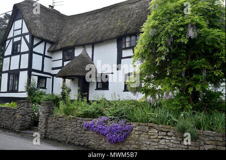 Thatched cottage in the village of Edington, Wiltshire, UK - Stock Photo
