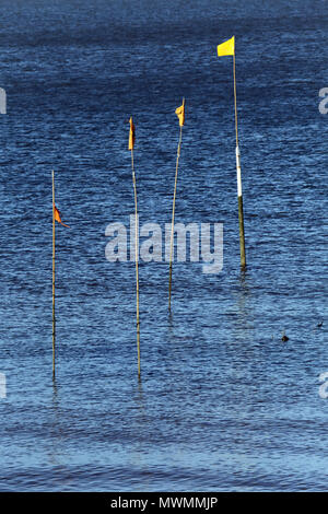 Four flags marking the location of oyster beds at Whitstable, Kent, UK. - Stock Photo