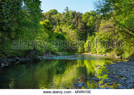 Highland Creek in summer flowing through the Carolinian Forest of Morningside Park in Toronto Ontario Canada river forest - Stock Photo