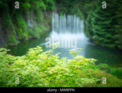 The Ross Fountain in the background of some Japanese maple leaves in summer at the Butchart Gardens near Victoria, British Columbia, Canada. - Stock Photo