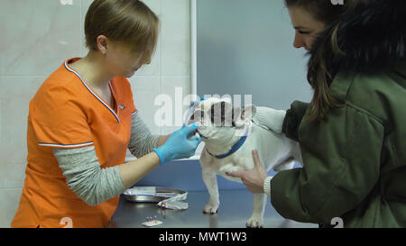 Veterinarian speaks to the dog owner in a veterinary hospital. Dog in the office of a vet doctor. - Stock Photo