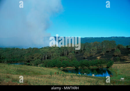 SMOKE FROM BUSH FIRES, DECEMBER 2001, HAWKESBURY VALLEY, NEW SOUTH WALES, AUSTRALIA - Stock Photo