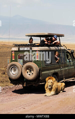 Tourists on a game drive watching a lion (Panthera Leo), Ngorongoro Crater Conservation Area, UNESCO, Tanzania, East Africa, Africa - Stock Photo