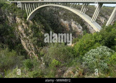 South African fynbos under the Paul Sauer Bridge, Nature's Valley, Western Cape, in the Tsitsikamma protected area on the Garden Route, South Africa - Stock Photo