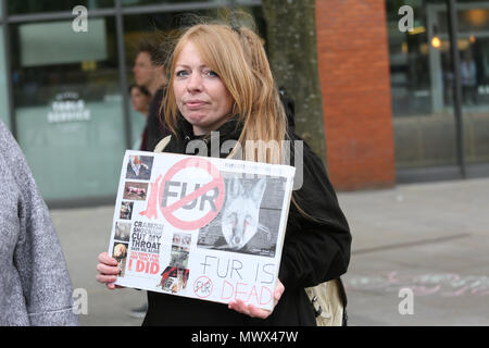 Manchester, UK. 2nd June 2018. Animal rights campaigner holding up an anti fur placard, Piccadilly. Manchester, 2nd June, 2018 (C)Barbara Cook/Alamy Live News - Stock Photo