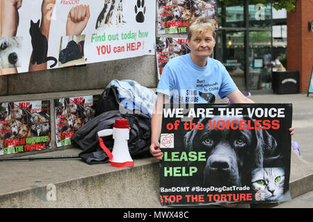 Manchester, UK. 2nd June 2018. An animal rights campaigner holding a placard which reads 'We are the voice of the voiceless', Piccadilly. Manchester, 2nd June, 2018 (C)Barbara Cook/Alamy Live News - Stock Photo