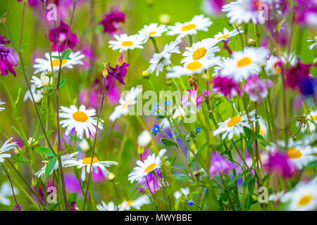 Out of focus images of colourful flowers simular to a Monet Impressionist painting. - Stock Photo