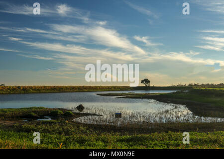 Low reservoir at sunset with lone tree in twilight in the misty mountain area of the Tsitsikamma, protected area, Garden Route, Cape, South Africa - Stock Photo