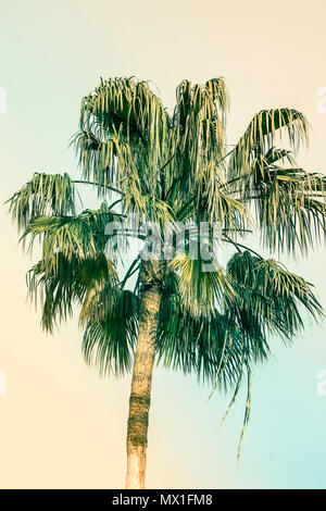 Palm Tree on Toned Pink and Turquoise Blue Duotone Sky Background. Trendy Pastel Colors. Surrealistic Vintage Style. Copy Space for Text. Tropical Sea - Stock Photo