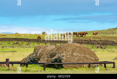 Close up of fallen Moai head at Tongariki archaeological site with wild horses, Easter Island, Rapa Nui, Chile - Stock Photo