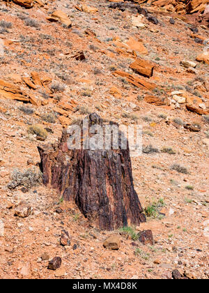 Upright petrified wood tree stump in Wolverine Petrified Forest, Wolverine Creek Trail in Grand Staircase-Escalante National Monument, Utah. - Stock Photo