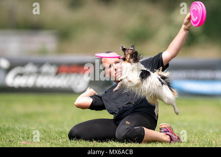 03 May 2018, Germany, Erftstadt: Lina Engelken and her dog Cookie taking part in the discipline 'freestyle' at the dog frisbee tournament. The participant throws up to seven frisbees that his dog has to catch. The freestyle event is combined to music. Around 60 particpants from 7 countries take part in the event. Photo: Marius Becker/dpa - Stock Photo