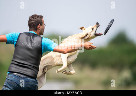 03 May 2018, Germany, Erftstadt: Sebastian Grahn and his dog Batido taking part in the discipline 'freestyle' at the dog frisbee tournament. The participant throws up to seven frisbees that his dog has to catch. The freestyle event is combined to music. Around 60 particpants from 7 countries take part in the event. Photo: Marius Becker/dpa - Stock Photo