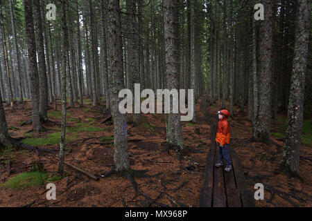 Lonely young boy in orange rain jacket walking on forest boardwalk in dark, moody woods with a head lamp on his head - Stock Photo