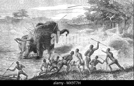 . English: Female Elephant Pursued with Javelins, Protecting Her Young. 'She often stood after she had crossed a rivulet, and faced the men, though she received fresh spears. It was by this process of spearing and loss of blood that she was killed, for at last, making a short charge, she staggered round and sank down dead in a kneeling posture. I did not see the whole hunt, having been tempted away by both sun and moon appearing unclouded. I turned away from the spectacle of the destruction of noble animals, which might be made so useful in Africa, with a feeling of sickness, and it was not re - Stock Photo