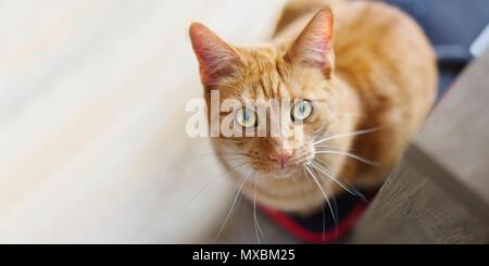 Cute ginger cat looking curious above to the camera. - Stock Photo