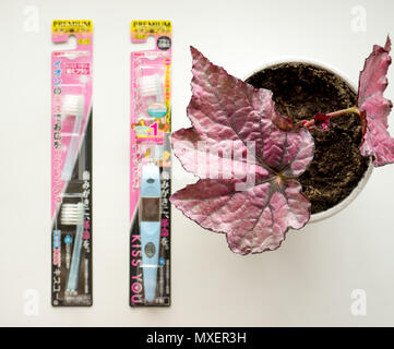 GOMEL, BELARUS - MAY 30, 2018: Japan Cosme Kiss you ionic Toothbrush. Cosme Inc. manufactures and sells OTC pharmaceuticals, oral hygiene products. - Stock Photo