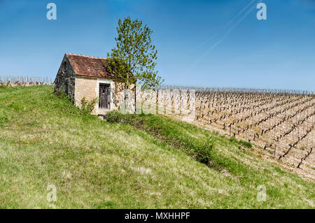 A small farm shed in the countryside is located next to a vineyard on the rolling hillls near Chablis, France. - Stock Photo