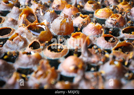 Bee Hive With Honey and Bee Microphotography - Stock Photo