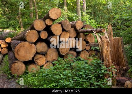 Germany, felled and stacked spruces in the Ardey mountains near the city of Wetter.  Deutschland, Ruhrgebiet, gefaellte und gestapelte Fichtenstaemme  - Stock Photo