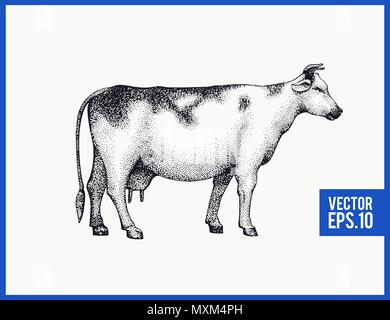 Graphical cow silhouette. Vector hand drawn cow illustration. Vintage style. - Stock Photo
