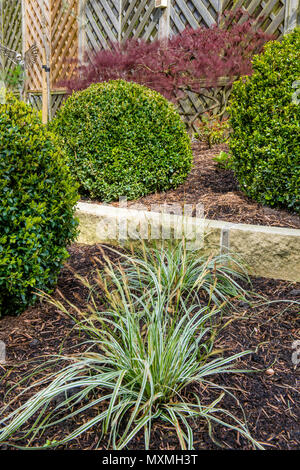 Corner of beautiful, landscaped, private garden border with contemporary design, shrubs, box balls, acer & ornamental grasses - Yorkshire, England, UK - Stock Photo