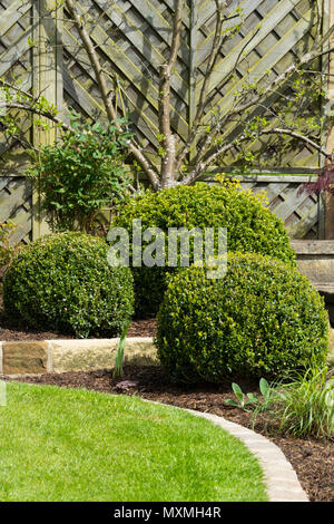 Close-up of beautiful, landscaped, private garden with contemporary design, border plants, shrubs, box balls & fan fruit tree - Yorkshire, England, UK - Stock Photo