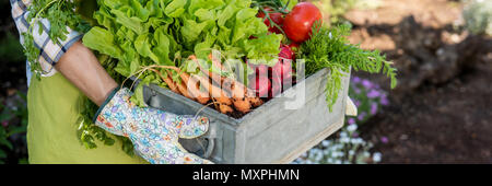 Unrecognizable female farmer holding crate full of freshly harvested vegetables in her garden. Homegrown bio produce concept. Sustainable living. - Stock Photo