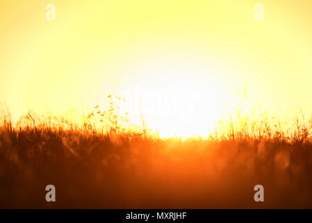 Beautiful sunset over the field - Stock Photo