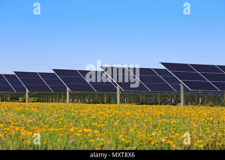 Solar panels on an open green field with yellow flowers and blue sky in the spring. - Stock Photo