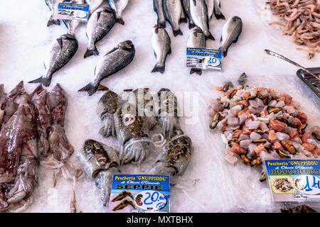 Tintenfisch auf dem Ballaro Markt in Palermo in Sizilien - Stock Photo