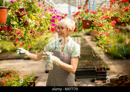 Portrait of  happy senior  florist woman standing and using sprayer in the large flower garden - Stock Photo